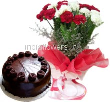Bunch of 20 Red & white Carnations and Half kg. Chocolate Cake