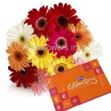 Bunch of 12 Mixed Colored Gerberas with Plastic Cellophane Packing and Small Cadbury Celebration