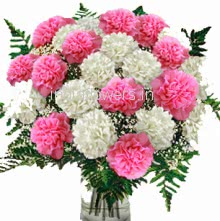 20 Pink and White Carnations