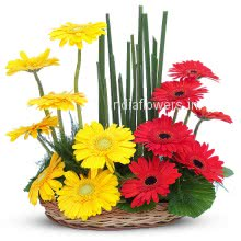 Arrangement of Yellow and Red Gerberas nicely decorated with fillers and greens