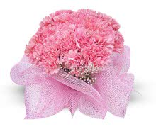 Flowers Bunch of 20 Pink Carnation