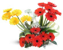 Arrangement of Red and Yellow Gerberas nicely decorated with fillers and greens