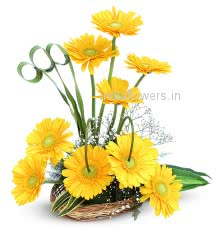 Arrangement of Yellow Gerberas nicely decorated with fillers and greens
