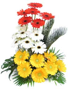 Arrangement of 20 Mixed Color Gerberas nicely decorated