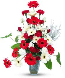 Flowers Arrangment 10  Red Gerbera and 10 White Gerberas and 10 Red Carnation  with fillers and greens... Please note this item will be delivered in Basket Arrangement