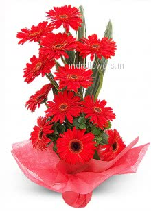 Beautiful Bunch of 20 Red Gerberas nicely decorated with Fillers and Ribbons